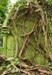 Highgate and ivy-covered tombstone